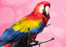 Macaw Parrot Online Coloring