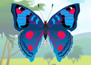 Colorful Butterfly Designer